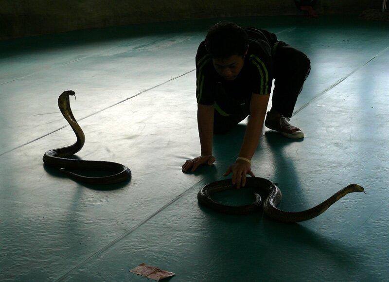Змеиное шоу, Пхукет