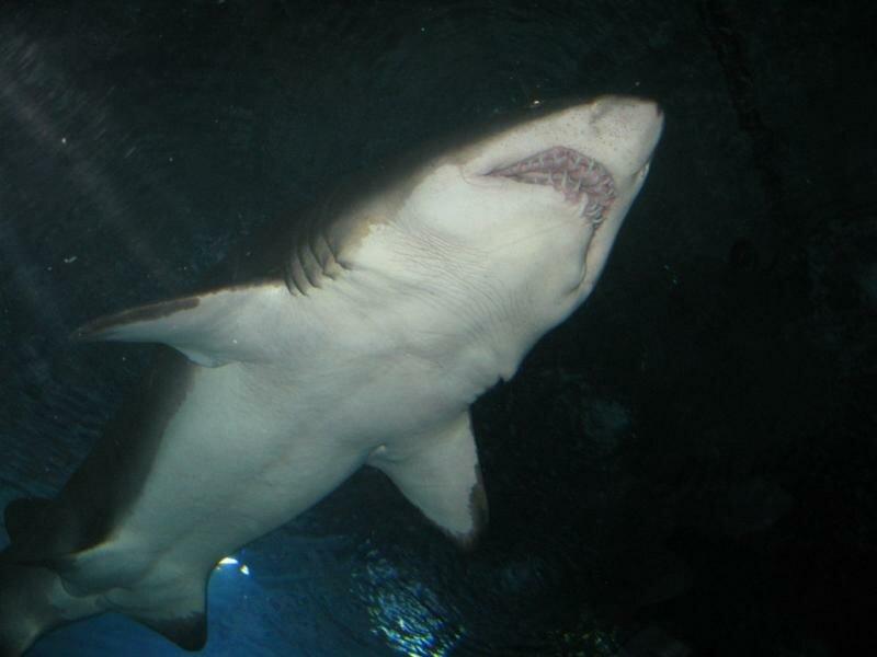 Устрашающее создание не более 2 метров длиной. Но с такими зубами размер вряд ли имеет значение.