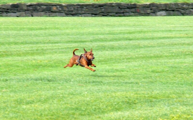 Пёс на набережной Тронхейма