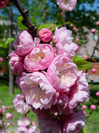 фестиваль цветов в Ботаническом саду МГУ «Аптекарский огород»