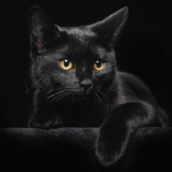 Історія про помсту чорного кота - Я в танку - гумор в ...