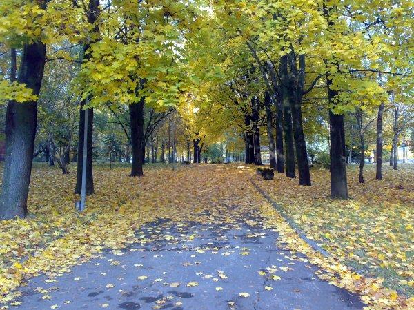 Пейзажи Украины: «Весна, лето, осень, зима… и снова весна ...
