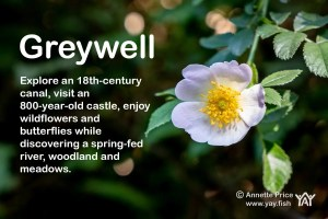 Greywell. Discover this delightful walk in Hampshire.