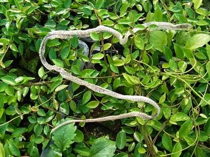 ヘビの抜け殻