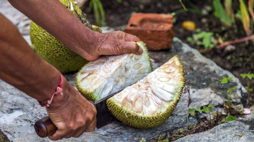 A mature jackfruit can weigh as much as 55kg (Credit: Credit: greenaperature/Getty Images)