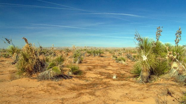 The Chihuahuan Desert is North America's largest desert, covering more than 200,000 square miles (Credit: Credit: Mark A Paulda/Getty Images)