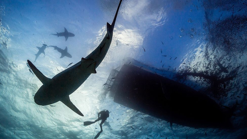 Getting into water where there are lots of bait fish that can attract sharks will increase your risk of being bitten (Credit: Alamy)