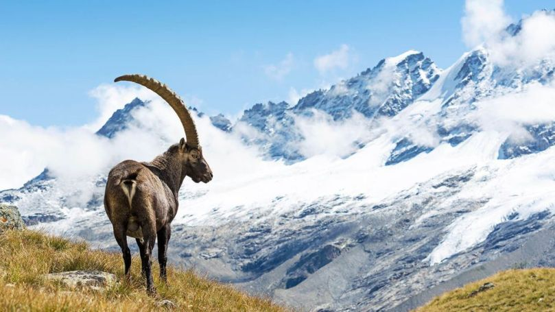 The Path of the Parks crosses Italy's Gran Paradiso National Park in the Alps (Credit: Credit: ueuaphoto/Getty Images)