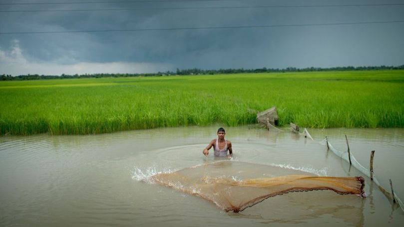 India's remaining wetlands are rapidly being encroached by more intensive human activity (Credit: Jonas Gratzer/Lightrockets/Getty Images)