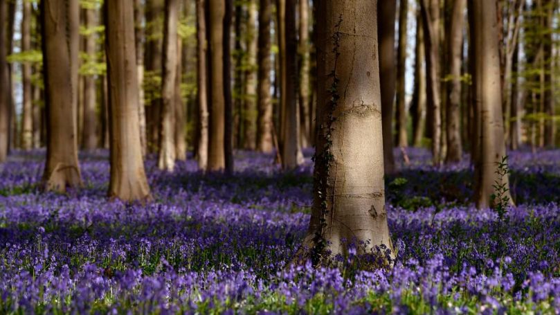 Wild woodland habitats are often diverse homes for a wide range of species, whereas plantations are home to fewer (Credit: Getty Images)
