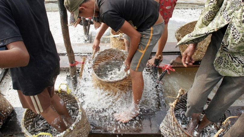 In some parts of Cambodia, prahok is still made by stomping on the fish with bare feet (Credit:Tang Chhin Sothy/Getty Images)