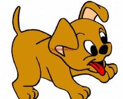 Cachorritos.Chihuahua