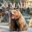 ES NOTICIA. Zoo de Madrid ofrece descuentos especiales para residentes en Alcalá de Henares los días 5 y 6 de septiembre