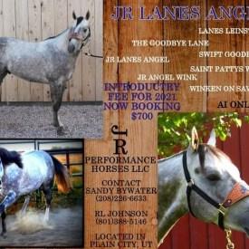 JR Lanes Angel Stallion