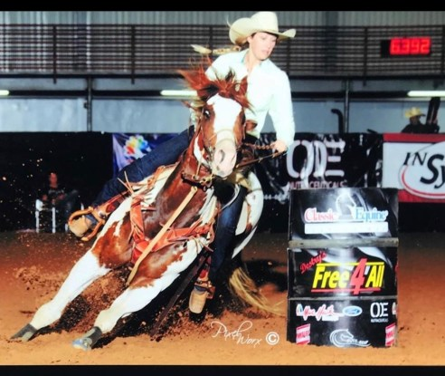 9 year old APHA Gelding