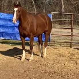 2D Barrel Horse