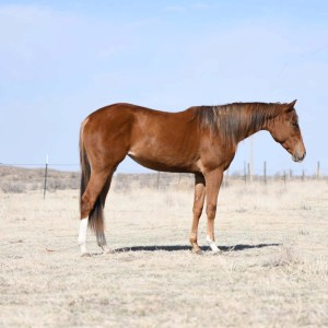 2 yo French Streakin Jess filly!