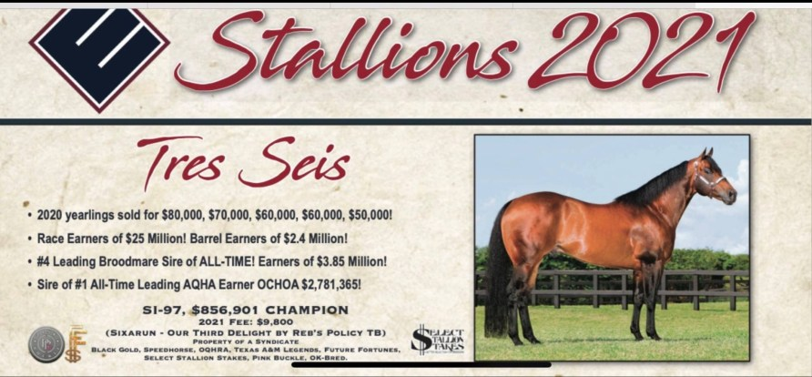 Several Quality Pink Buckle Foals to pick from in 2022!