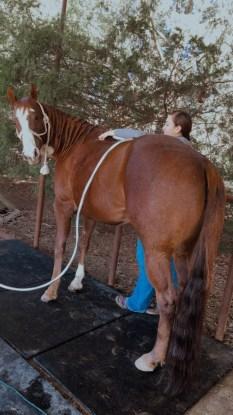 Granddaughter of Dash Ta Fame‼️  Barrel/Pole horse