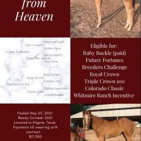 Weanling JLDTH Filly