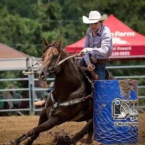 PROVEN 1D Barrel/Rodeo Horse