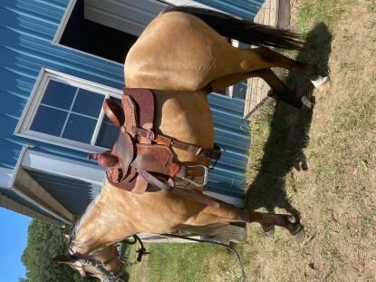 2019 Buckskin Stallion