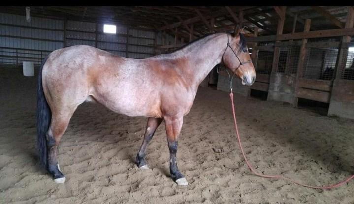Project barrel horse
