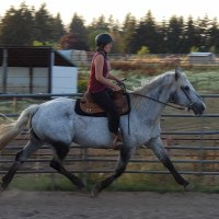 Percheron cross mare