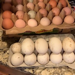 Fresh Chicken and Duck Eggs