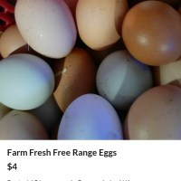 Free range farm fresh eggs