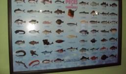 Oferta. Se vende cuadro enmarcado de 60 peces de Canarias en relieve.