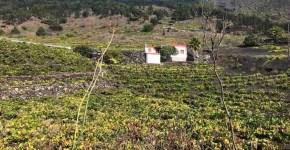 Finca con viña, frutales y casa en una zona inmejorable de Las Manchas