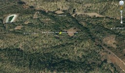 Terreno de pinar