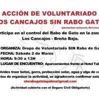 Acción de voluntariado Los Cancajos Sin Rabo de Gato