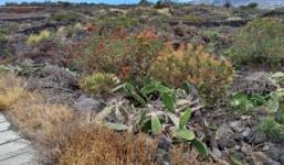 V-145: Se vende terreno rustico en el Camino La Vinagrera, Todoque