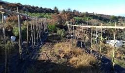 V-256: Terreno con apero cerca de la Plaza Glorieta, Las Manchas