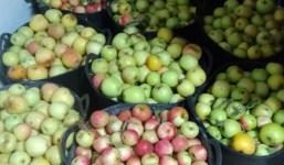 Se venden manzanas de garafia