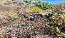 Terreno cultivado de Viña