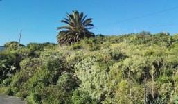 Terreno urbanizable en Tenagua