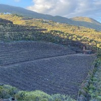 A la venta terreno con viña en producción en una buena zona de Villa de Mazo
