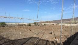 Se vende 7 celemines - ideal para sembrar plátanos o aguacates.  En Las Martelas. Los Llanos