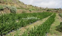 A la venta parcela agrícola con depósito de agua