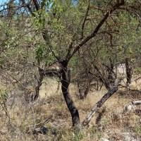 A la venta terreno agrario en Puntagorda
