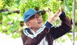 El Espacio Cultural CajaCanarias La Palma acoge la proyección del largometraje Grapes of joy