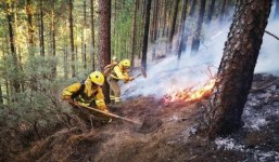 Bases de Convocatoria para Técnico Bombero Forestal Dispositivo BRIF