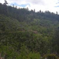 Se venden 2 parcelas agrarias en Tijarafe