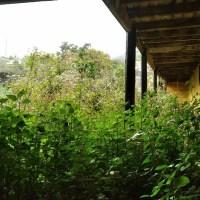 Limpieza de Fincas y Jardines