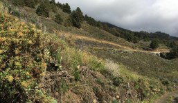 Terreno agrario en Jedey