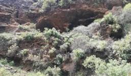 A la venta cueva en Tijarafe