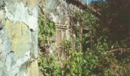 Finca con antigua casa canaria del siglo XIX